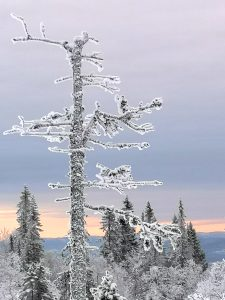 Landskap - lys vinter